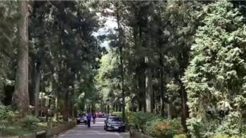 空汙入侵 中研院研究:溪頭芬多精被轉化為PM2.5