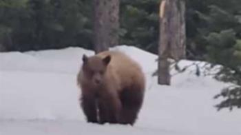 距離僅18公尺!他跑步遇野生黑熊 倒退走1km保命