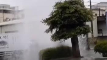 雨遲楠西愛文芒果重傷 澄清湖估5/7滿水位