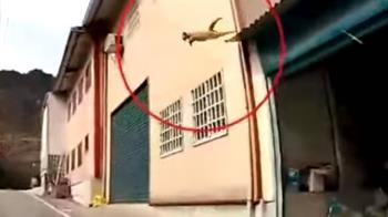 天降貓咪! 撞破車擋風玻璃 駕駛乘客驚嚇破表