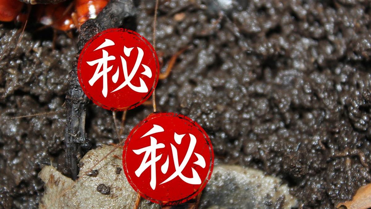 櫻桃紅蟑超厲害!皮薄餡多好消化 受封鑽石級飼料