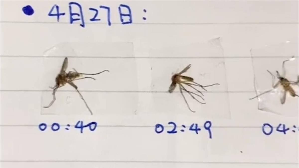 每晚大戰蚊子3小時 他怒做「殺蚊日記」:今天打了5隻
