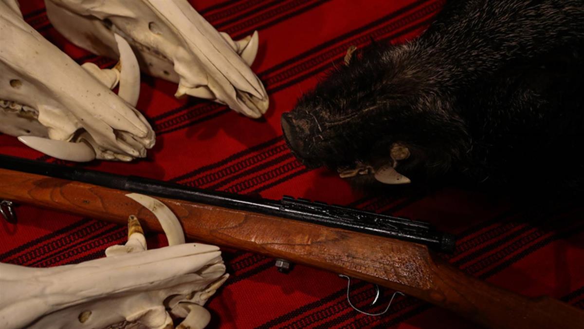王光祿案  大法官:原住民狩獵相關規範部分違憲