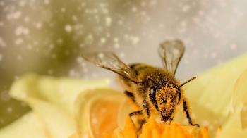 荷蘭發現蜜蜂能聞出新冠病毒 準確率高達95%