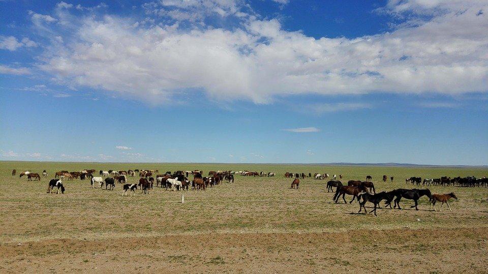inner-mongolia-3528262_960_720.jpeg