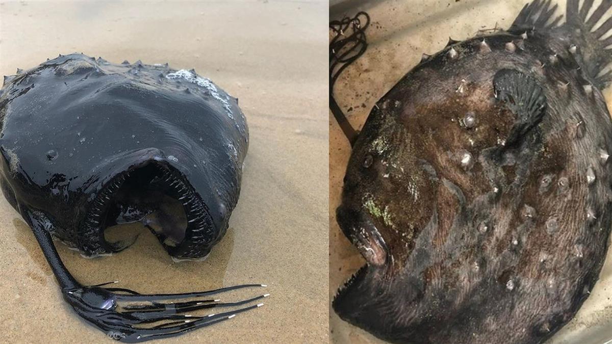驚!巨型深海魚被沖上岸 網嚇壞:大地震要來了?