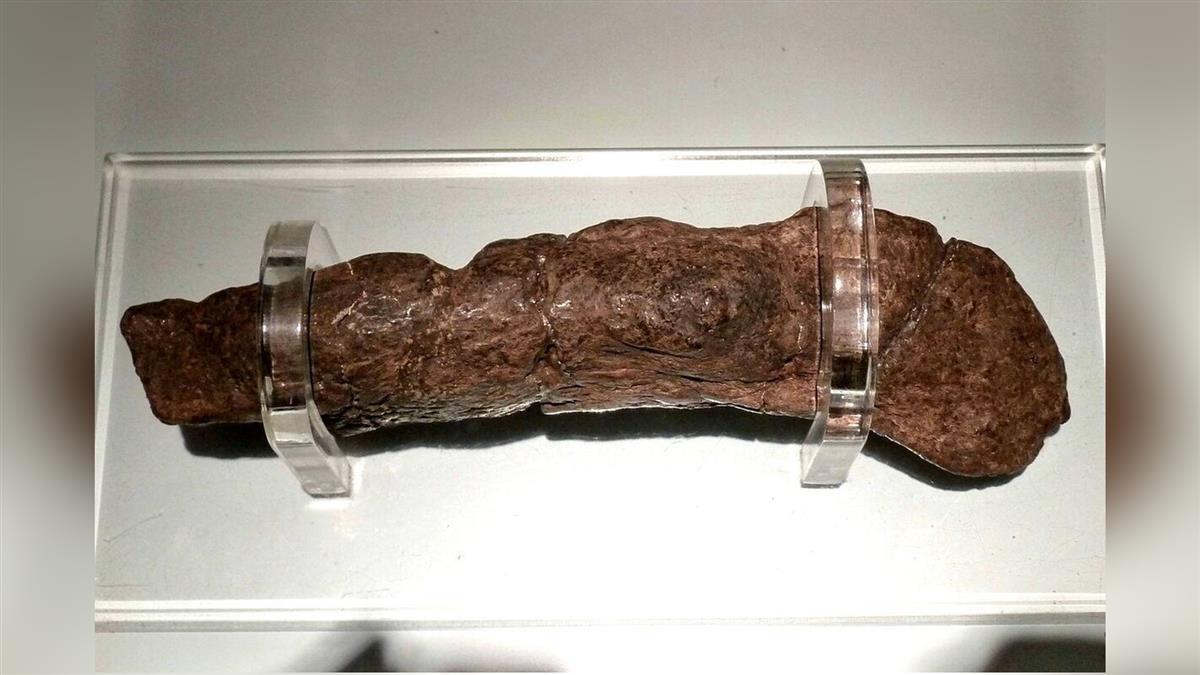 維京海盜大便化石長20公分 內藏百萬顆蟲卵