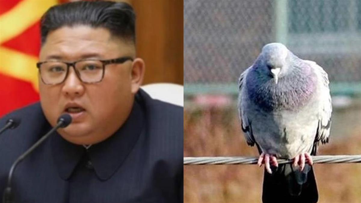 金正恩:中國來的鳥傳新冠!氣炸要北韓見鴿就殺