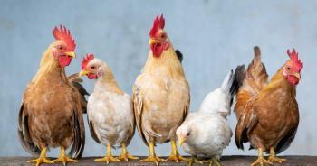 全球首例!陸驚傳H10N3禽流感「禽傳人」 指揮中心回應了