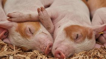 全台首例!5歲女童染豬流感 體內驗出H1N2v病毒