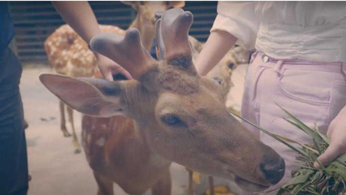 台灣經驗逐「鹿」廈門 打造梅花鹿樂園