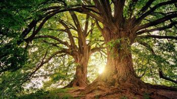 少女失蹤3天陳屍樹上「右眼被挖出」驚人身分曝光