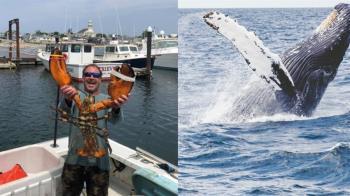 漁夫遭鯨魚活吞!口含40秒被吐出 驚悚過程曝