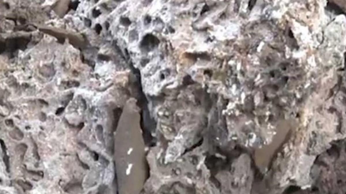 震撼!60多年巨大白蟻穴 蟻后長達5公分