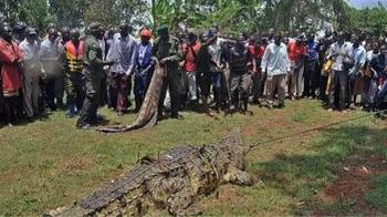 5公尺巨鱷「10年吃80人」 遭捕生一堆後代:全變成手提包