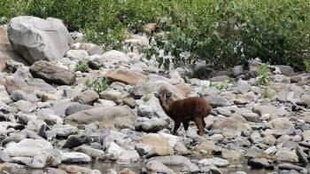 震撼!雪霸國家公園沒人了 罕見保育動物全跑出來