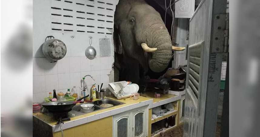 突轟天巨響!大象凌晨破牆找東西吃 屋主嘆:牠是常客了