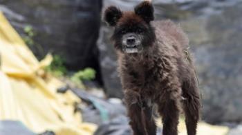 路邊驚見「奇特生物」是狗還是熊?專家給解答了