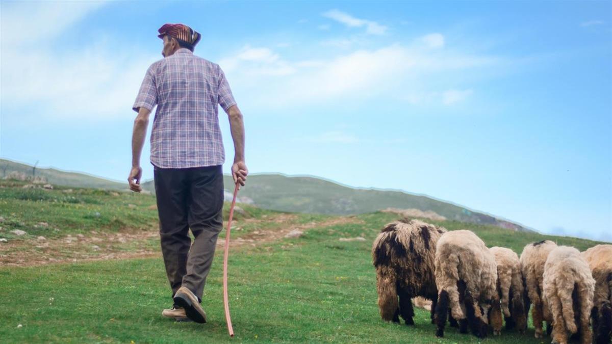 月薪2萬7還包吃包住 網暴動為「隱藏福利」搶當牧羊人