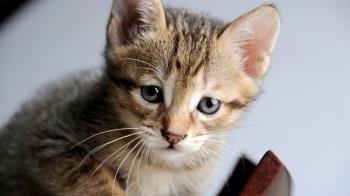 撿野貓回家養!半年後驚人變化嚇壞她 竟是超稀有動物