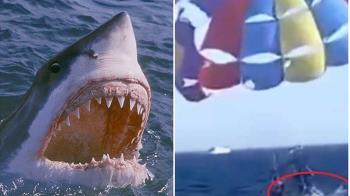 37歲男海上玩滑翔傘「鯊魚突飛起」下秒小腿被啃光
