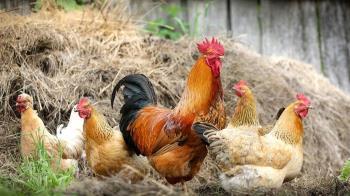 四川傳人類染H5N6禽流感 專家稱傳染風險低
