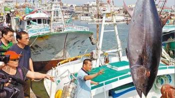 黑鮪魚價格崩盤 每公斤2000狂跌剩140元