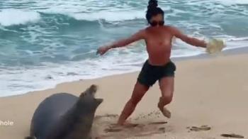 新婚人妻「亂摸瀕危海豹」收到死亡威脅 超慘下場曝