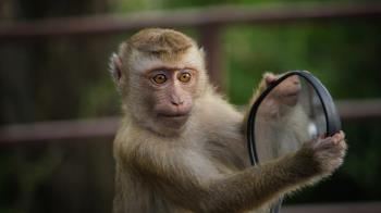 陸爆首例「猴B病毒」感染者 53歲獸醫解剖後染病亡