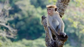 又見怪病!獸醫解剖猴子 2個月後慘死