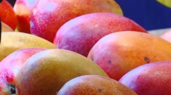 孕婦、胎兒不能吃芒果?營養師解答傳說 1方法減少過敏