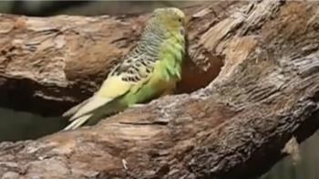 新竹「森林鳥花園」不敵疫情停業 網友:太悲傷的消息