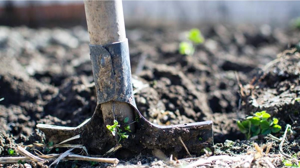 農耕發現「40把槍埋農地」 考古專家驚呼:是諸葛亮的武器