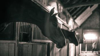 19歲少年凍未條!闖馬廄跟馬連結 老闆目睹嚇壞