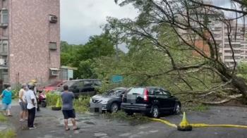 不敵強風豪雨狂襲 基隆社區大樹倒塌壓毀5車