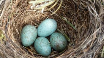 奇葩男壞壞竟「塞蛋」 她嚇傻落跑:把我當鳥巢?