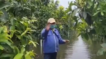 南部豪大雨不斷!蓮霧園泡水中 絲瓜、木瓜、西瓜全泡爛