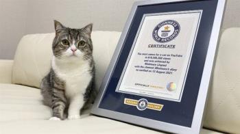 YouTube觀看數6.7億 金氏世界紀錄認證牠是「最受歡迎的貓」