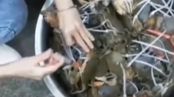 陸蟹注「膠狀物」增蟹膏?專家:釀螃蟹死亡、難販售