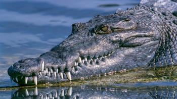 女童遭鱷魚拖下水 朋友目睹全程崩潰