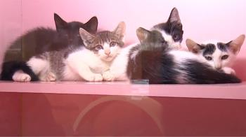 領養貓先簽「違約罰430萬」 動保團體直呼:不合理