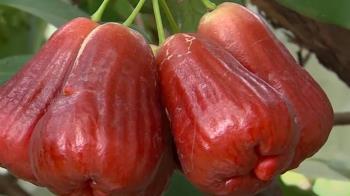 大陸禁台灣水果 世貿組織證實納入11月議程處理