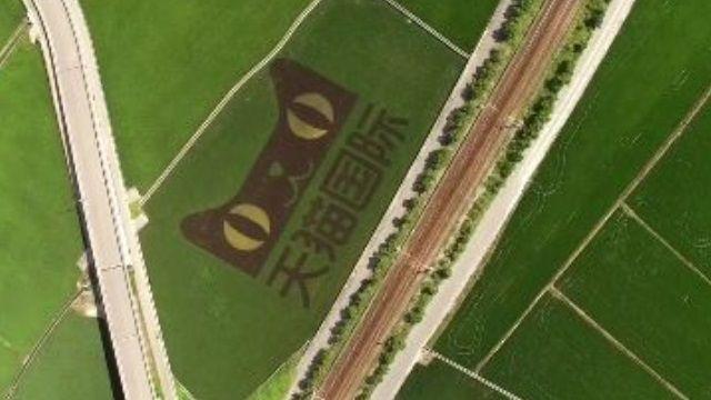 阿里巴巴來台「淘米」 小農攻雙11戰場