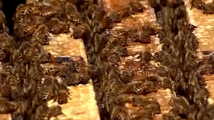 有機天然蜂蜜攏係假!百貨賣場緊急下架