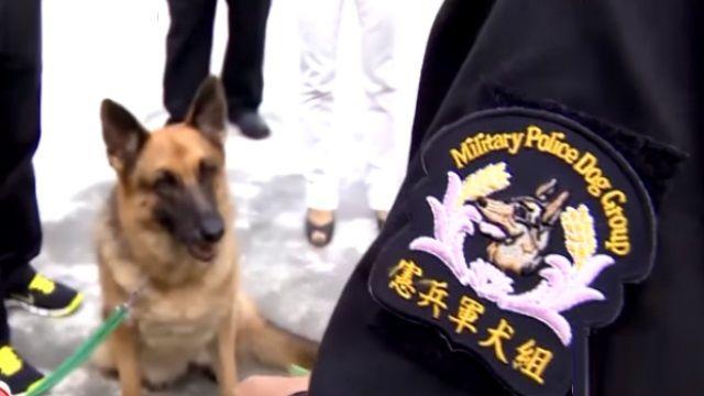 靈犬萊西「偵爆犬」上陣捍衛未來總統?