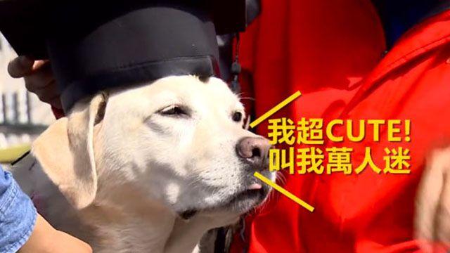 台版可魯現身台科大 在校七年畢業囉!
