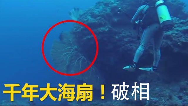 是誰下毒手?蘭嶼藍洞千年大海扇破相