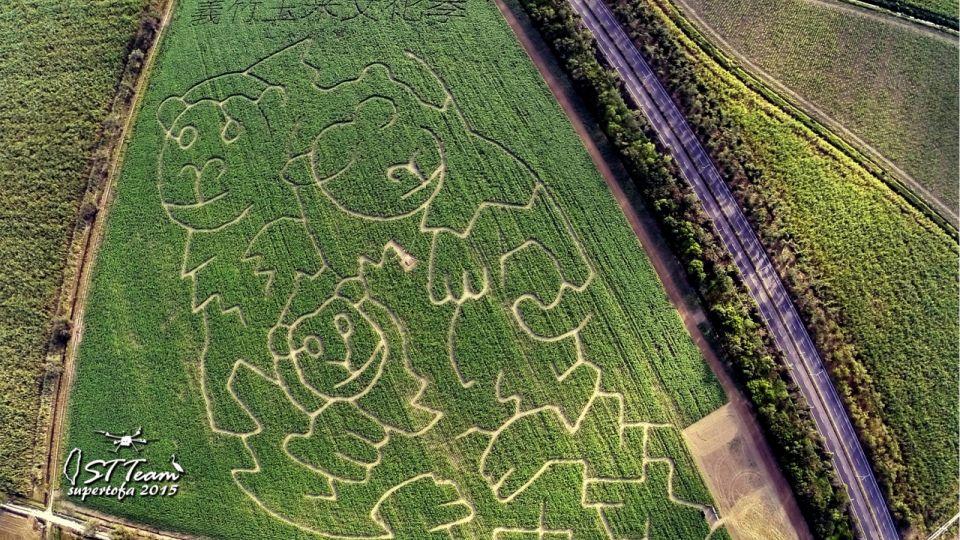 誰來挑戰!全台最大「玉米田迷宮」等你來