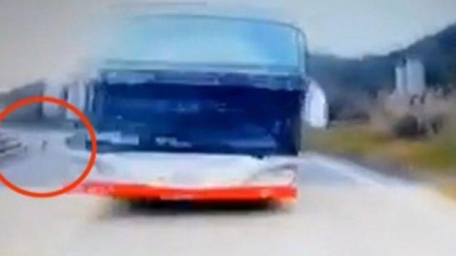 遊覽車迎面衝來險釀禍 原來都是因為牠