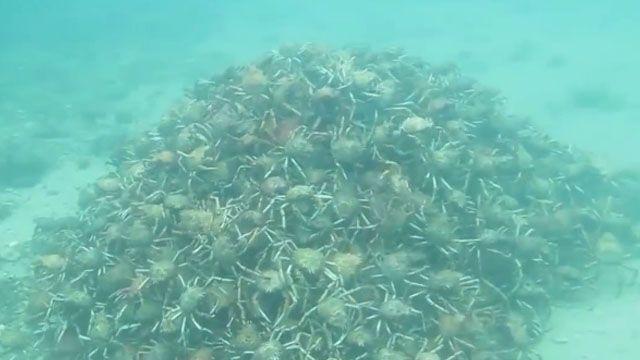 螃蟹版末日之戰?暗藏海底的高金字塔
